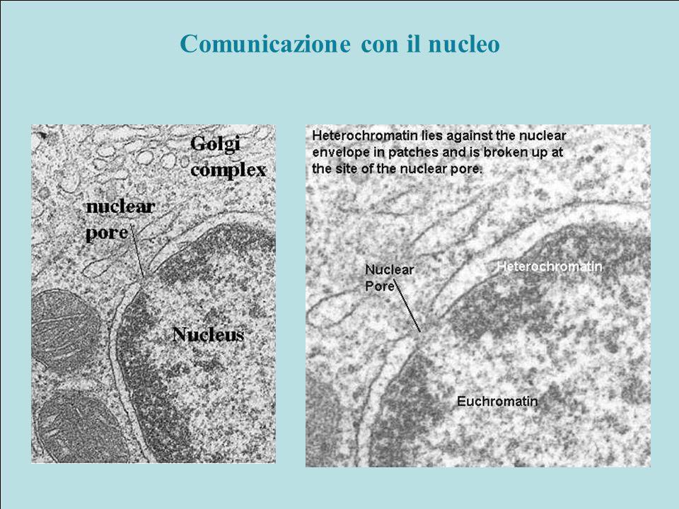 Comunicazione con il nucleo