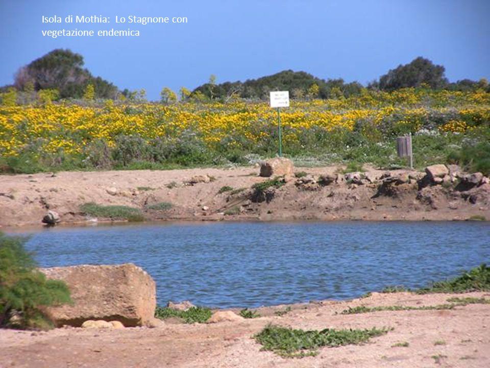 Isola di Mothia: Lo Stagnone con vegetazione endemica