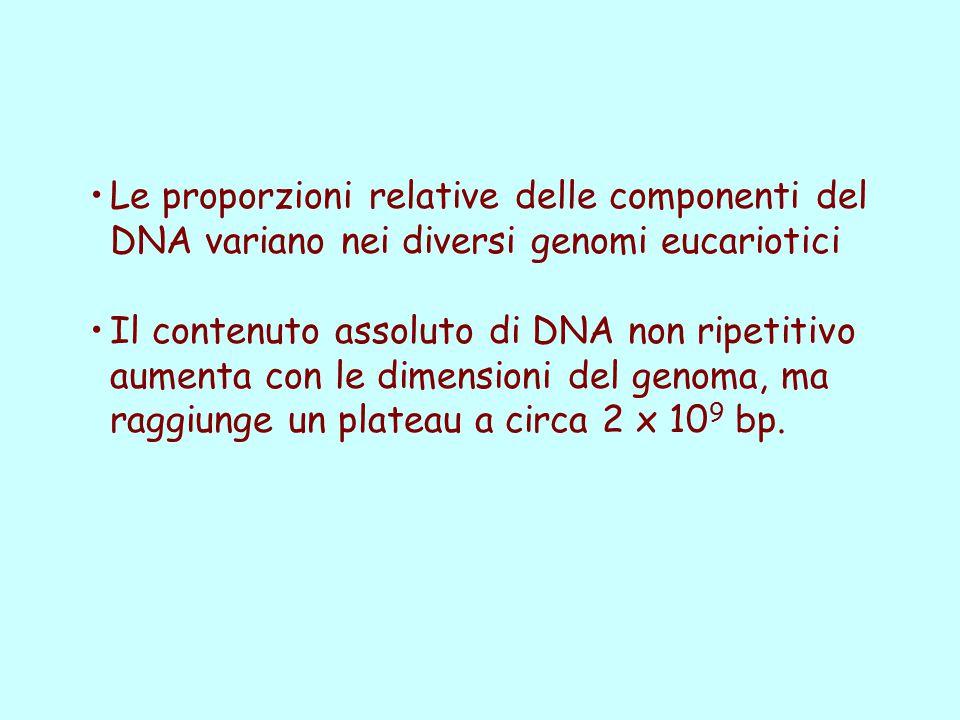Le proporzioni relative delle componenti del DNA variano nei diversi genomi eucariotici