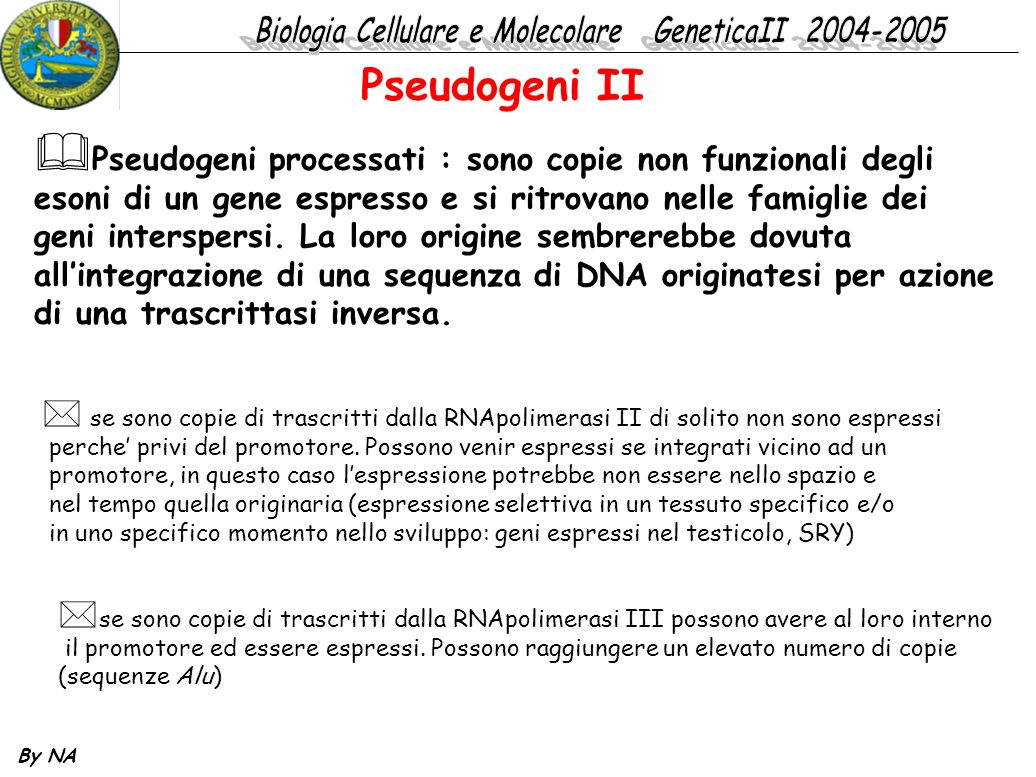 Pseudogeni II