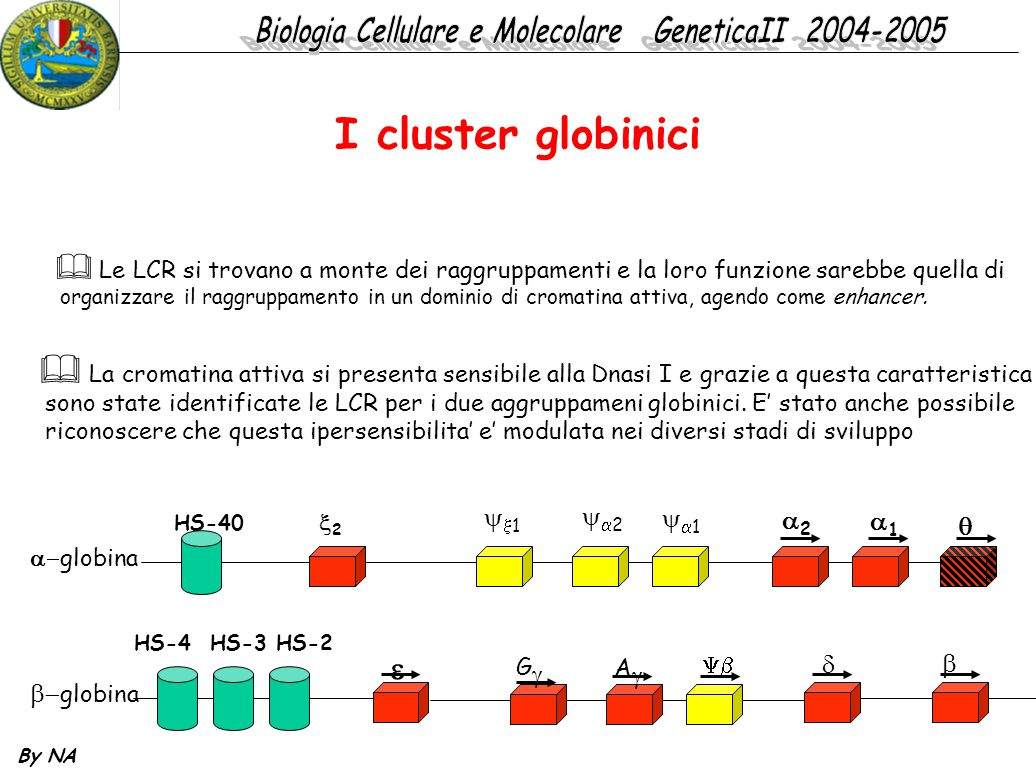 I cluster globinici  1 2 1 2 1    globina