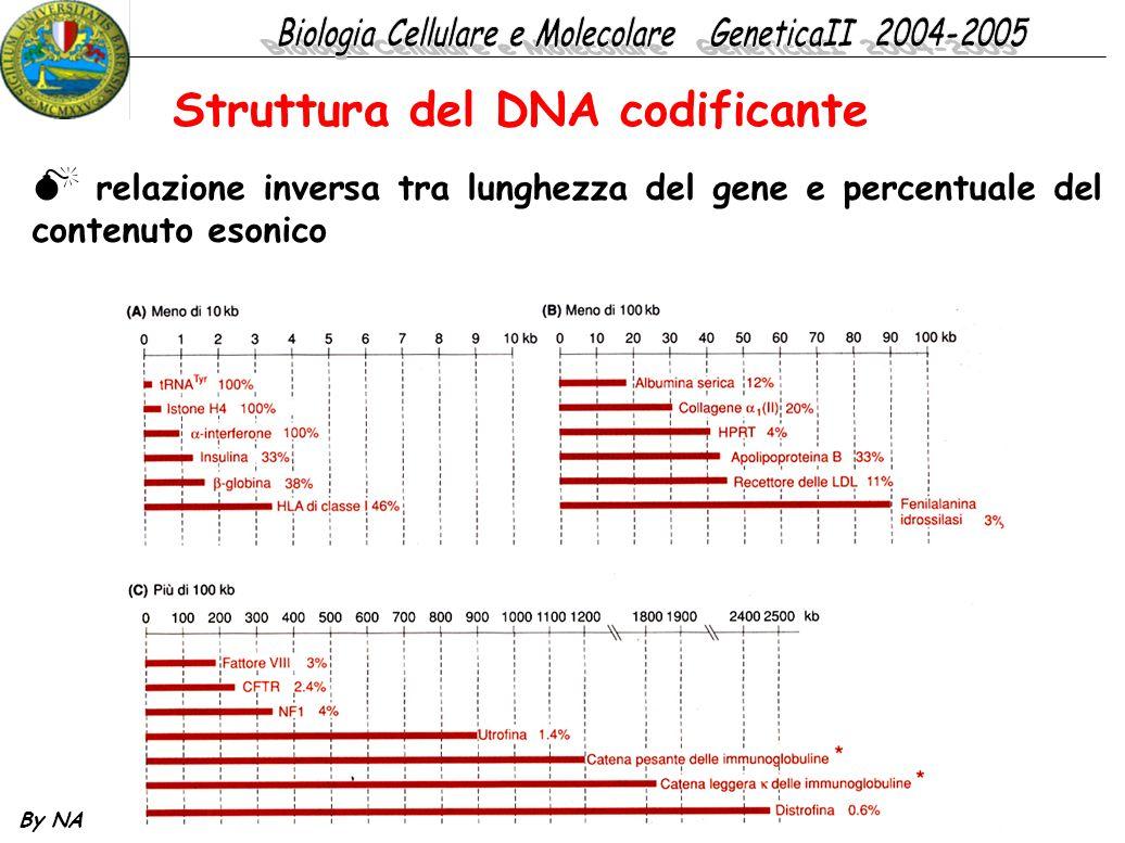Struttura del DNA codificante