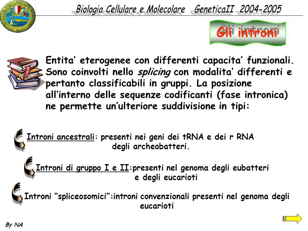 Introni di gruppo I e II:presenti nel genoma degli eubatteri