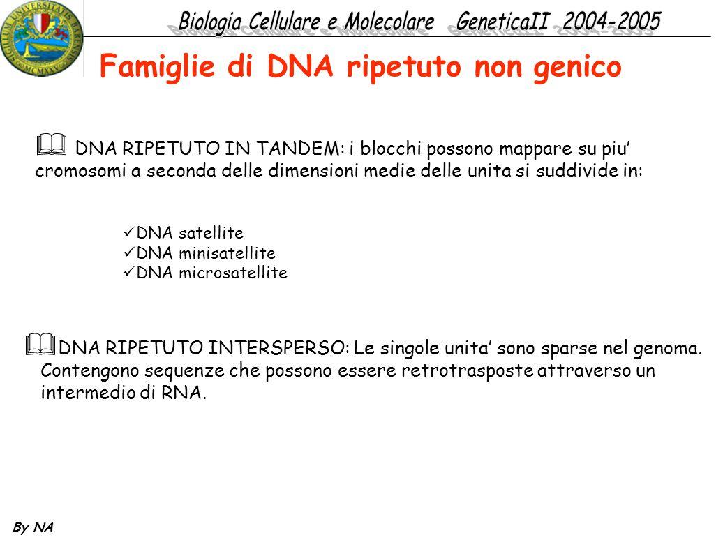 Famiglie di DNA ripetuto non genico