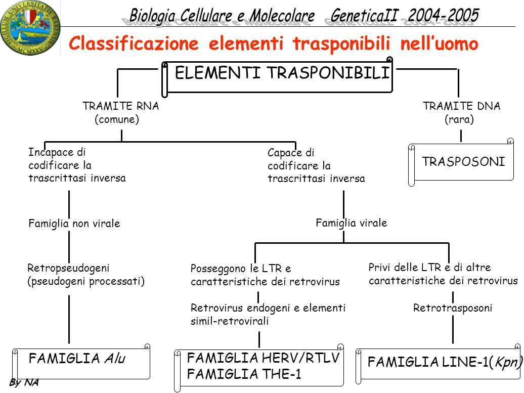 Classificazione elementi trasponibili nell'uomo