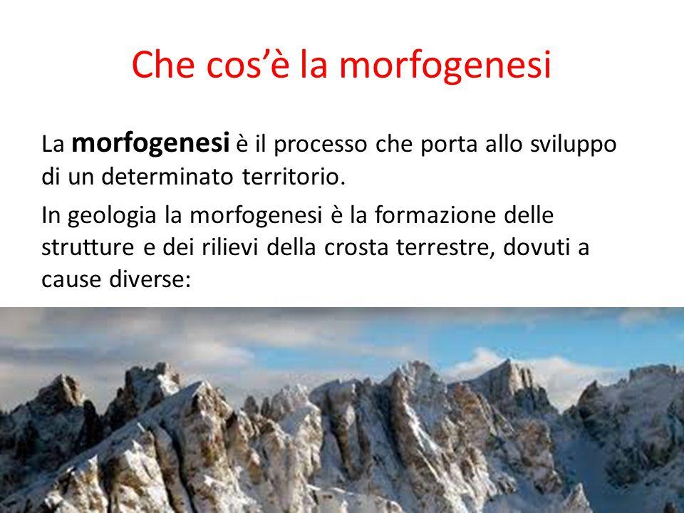 Che cos'è la morfogenesi