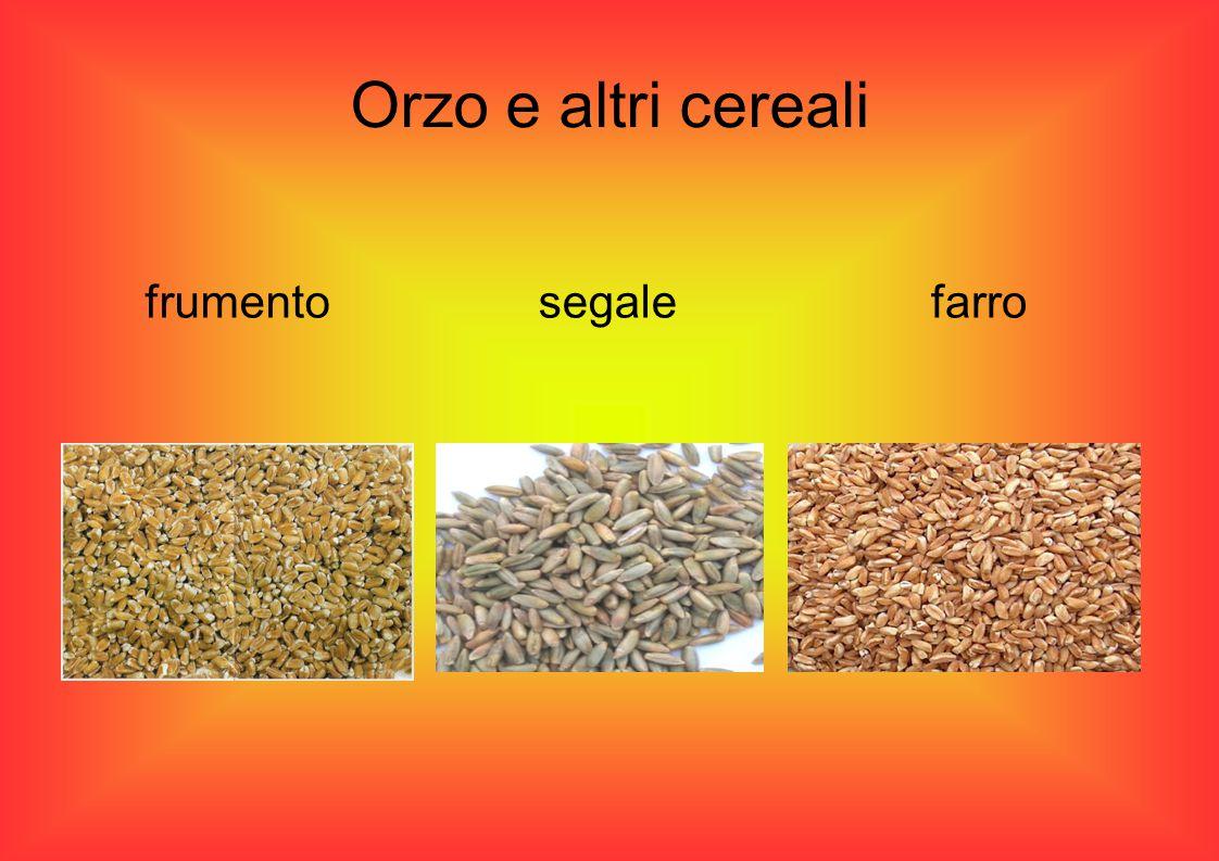 Orzo e altri cereali frumento segale farro