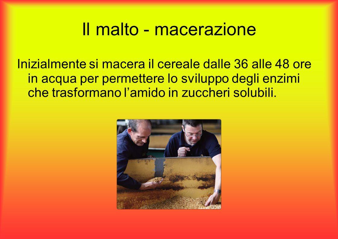 Il malto - macerazione