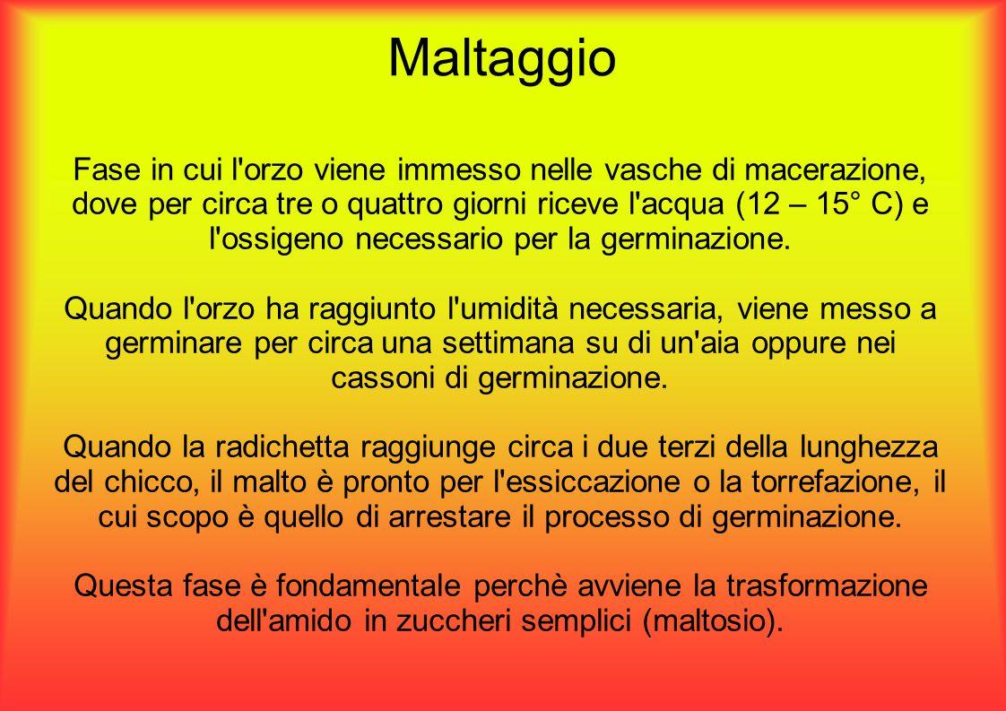 Maltaggio