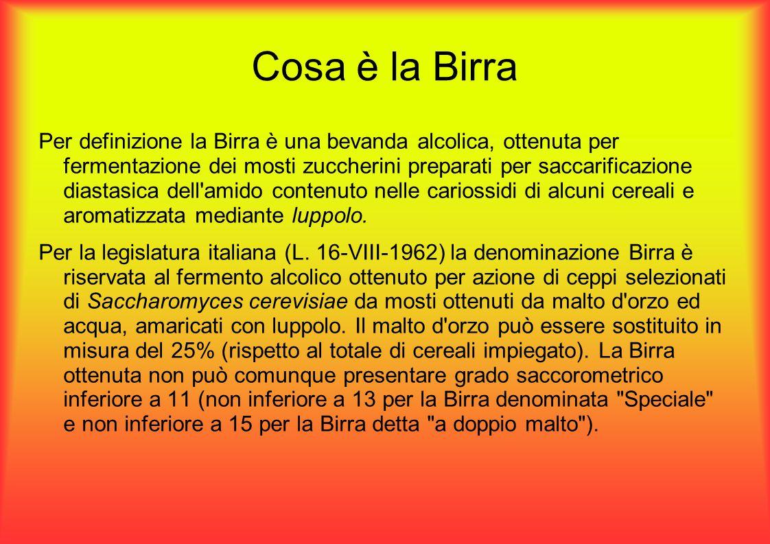 Cosa è la Birra