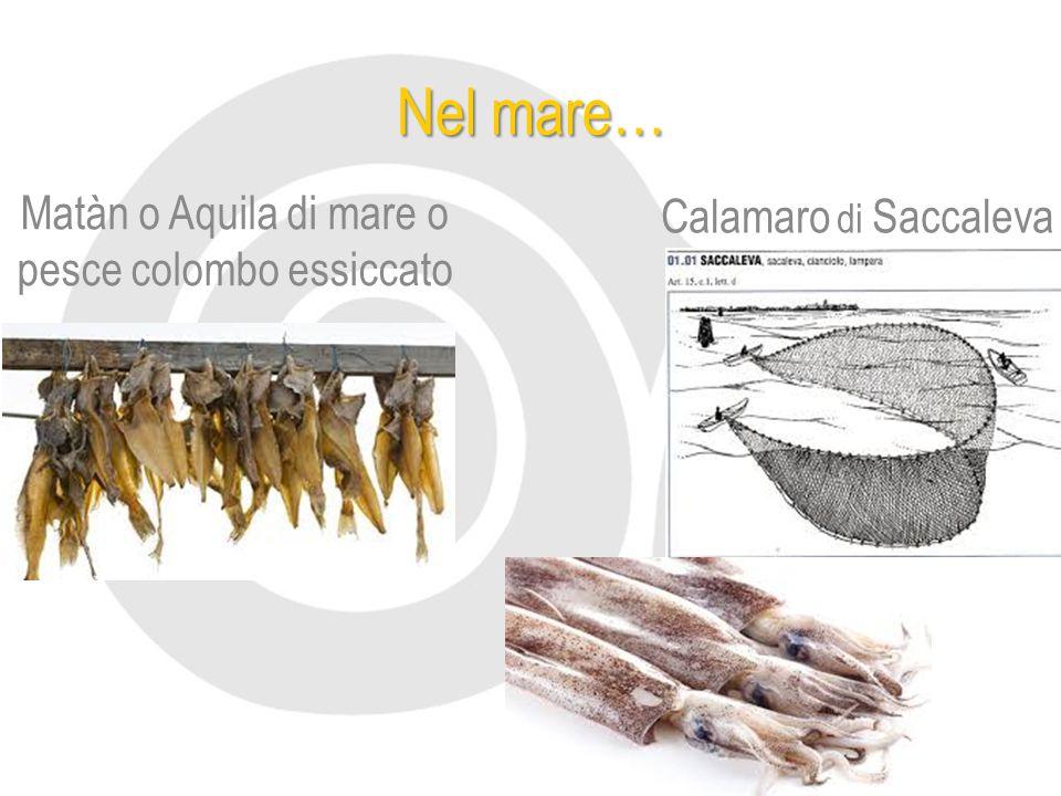 Matàn o Aquila di mare o pesce colombo essiccato