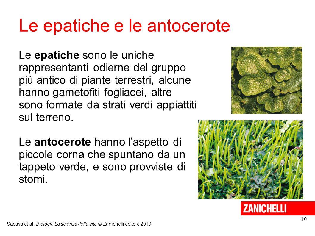 Le epatiche e le antocerote