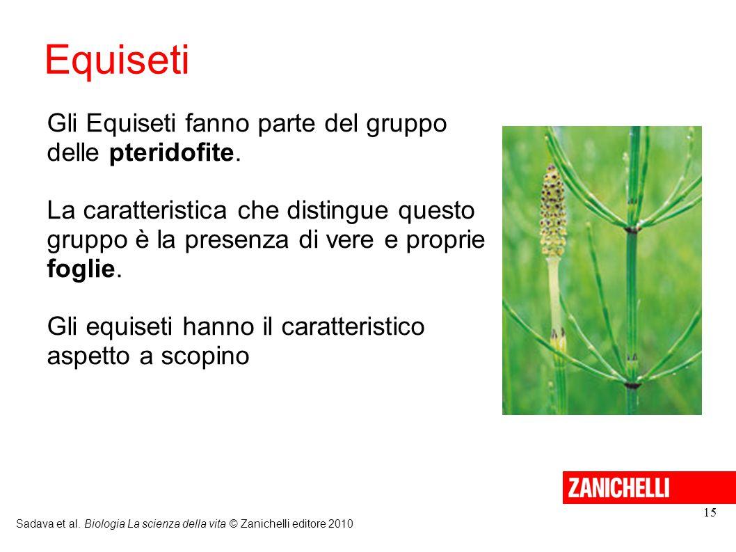 Equiseti Gli Equiseti fanno parte del gruppo delle pteridofite.