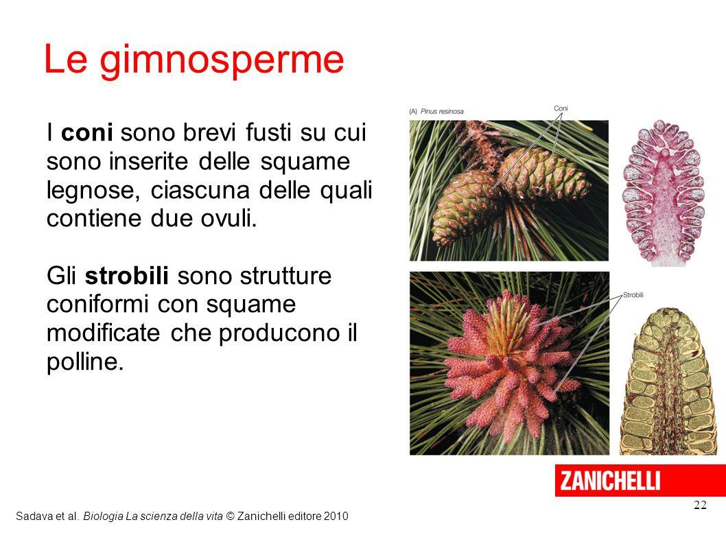 Le gimnosperme I coni sono brevi fusti su cui sono inserite delle squame legnose, ciascuna delle quali contiene due ovuli.