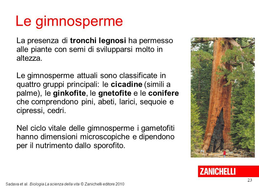 Le gimnosperme La presenza di tronchi legnosi ha permesso alle piante con semi di svilupparsi molto in altezza.