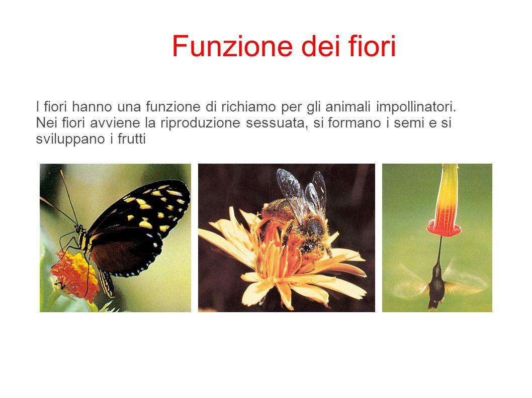 Funzione dei fiori