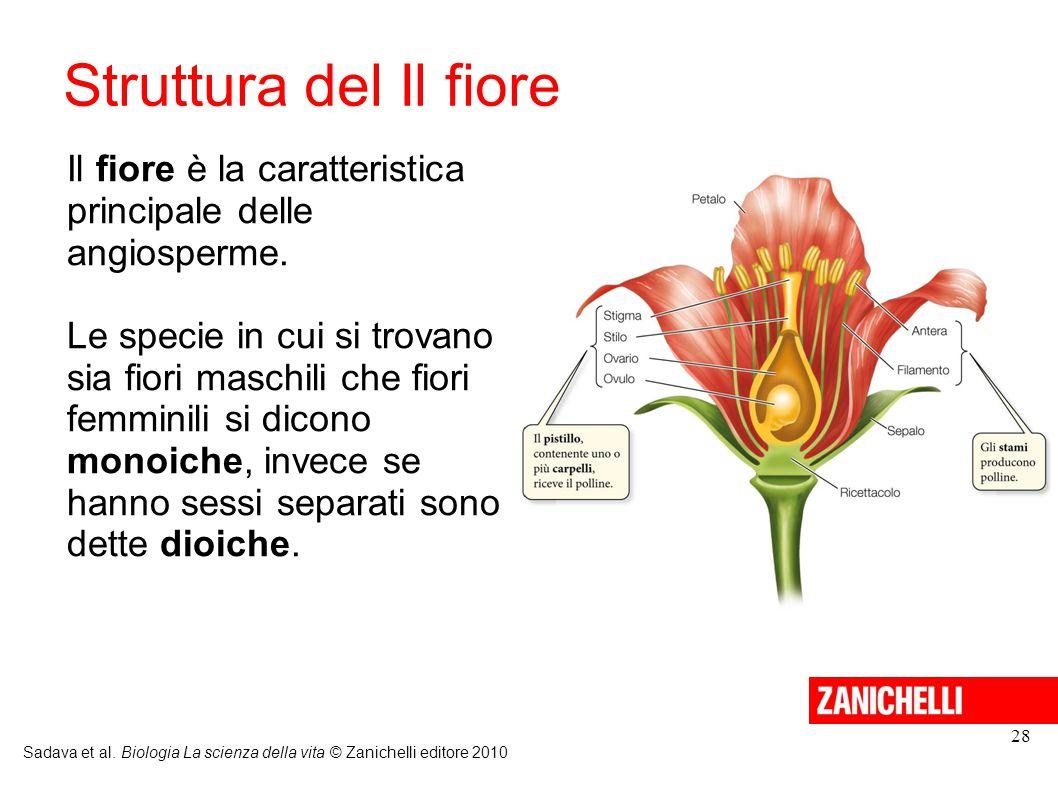 Struttura del Il fiore Il fiore è la caratteristica principale delle angiosperme.