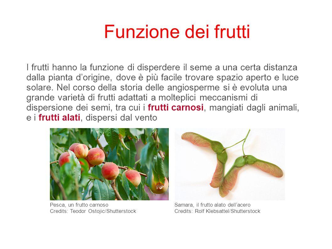 Funzione dei frutti