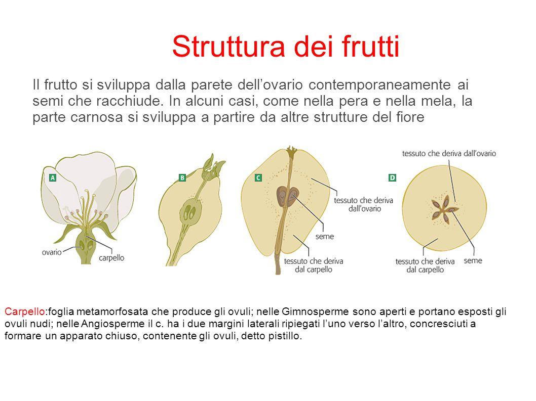 Struttura dei frutti
