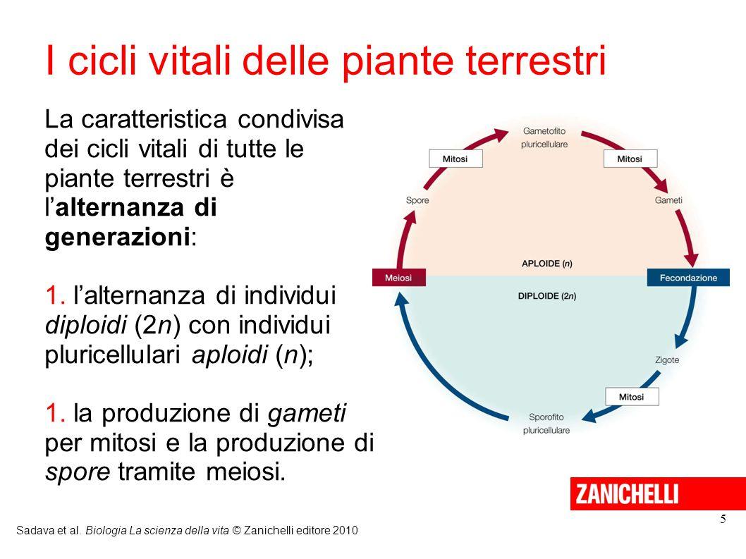 I cicli vitali delle piante terrestri