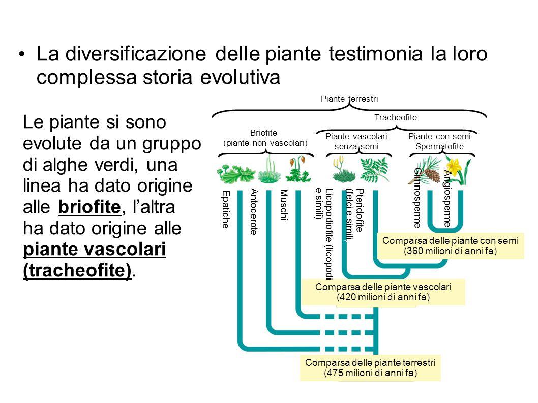 La diversificazione delle piante testimonia la loro complessa storia evolutiva
