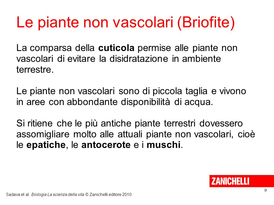 Le piante non vascolari (Briofite)