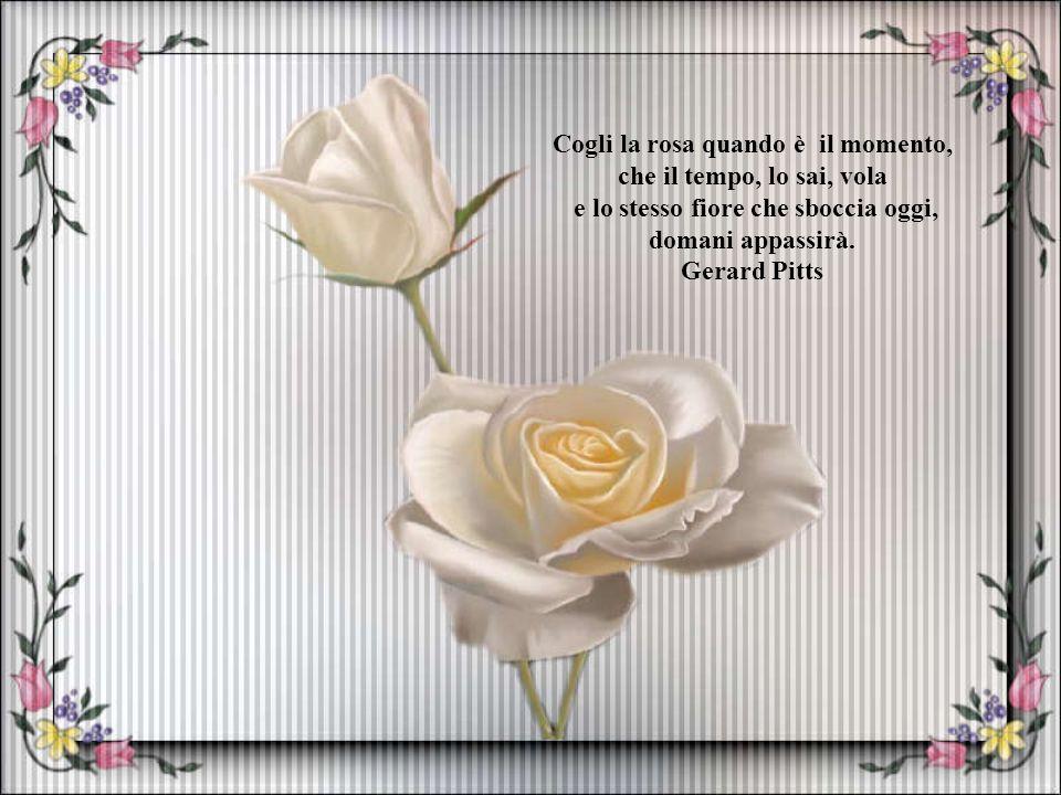 Cogli la rosa quando è il momento, e lo stesso fiore che sboccia oggi,
