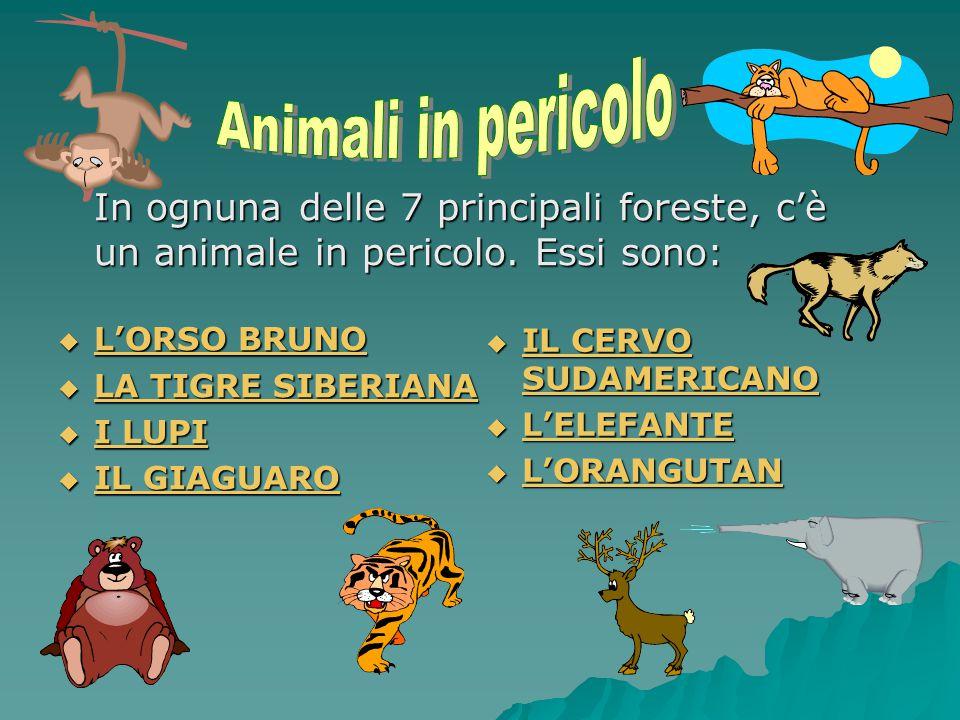 Animali in pericolo L'ORSO BRUNO LA TIGRE SIBERIANA I LUPI IL GIAGUARO