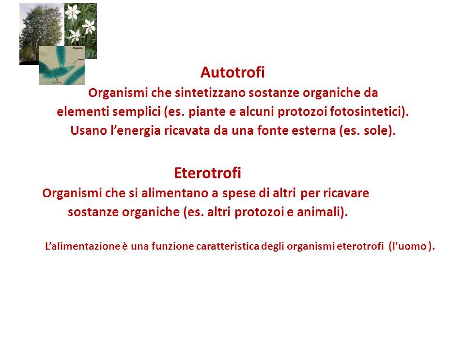 Autotrofi Eterotrofi Organismi che sintetizzano sostanze organiche da
