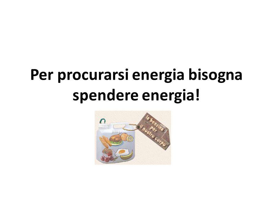 Per procurarsi energia bisogna spendere energia!