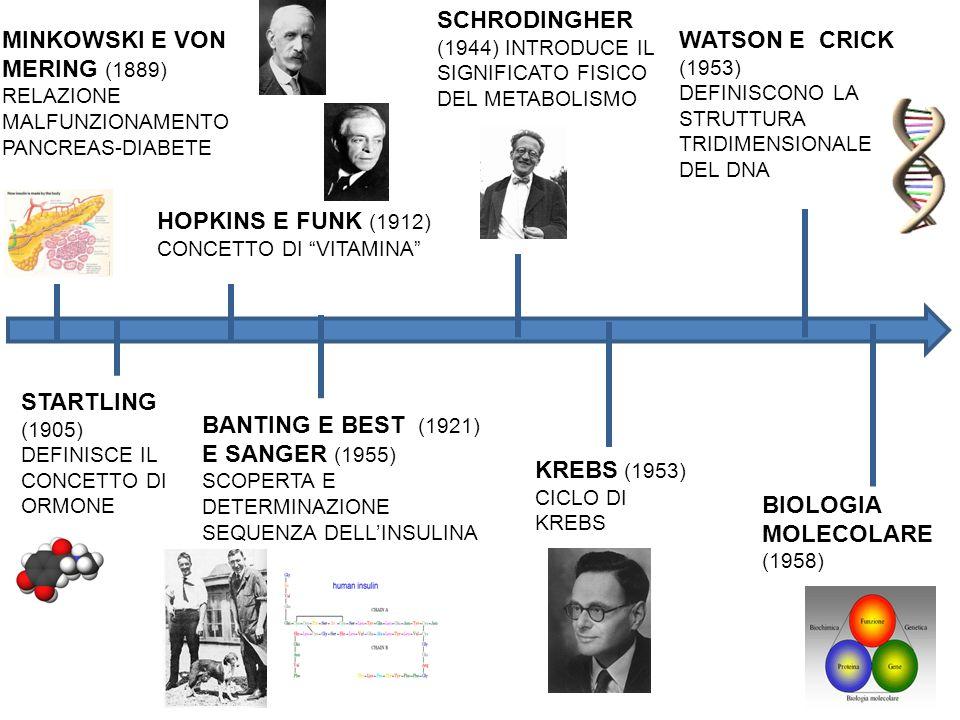 SCHRODINGHER (1944) INTRODUCE IL SIGNIFICATO FISICO DEL METABOLISMO