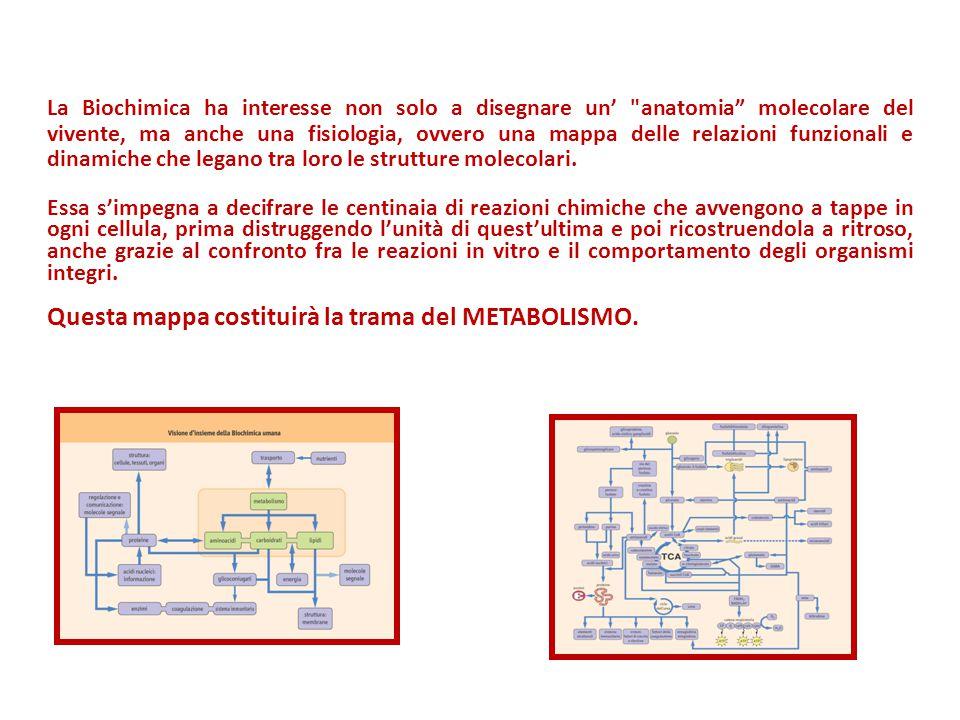Questa mappa costituirà la trama del METABOLISMO.