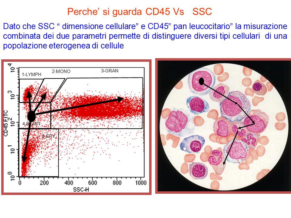 CD45: citogramma di un midollo normale