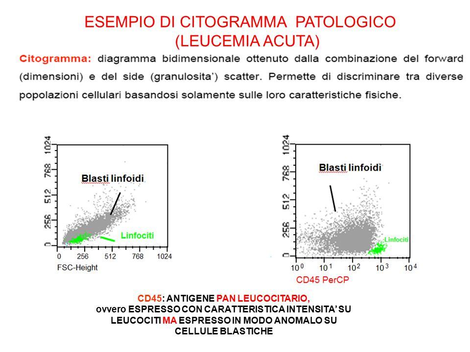 CD45: ANTIGENE PAN LEUCOCITARIO,
