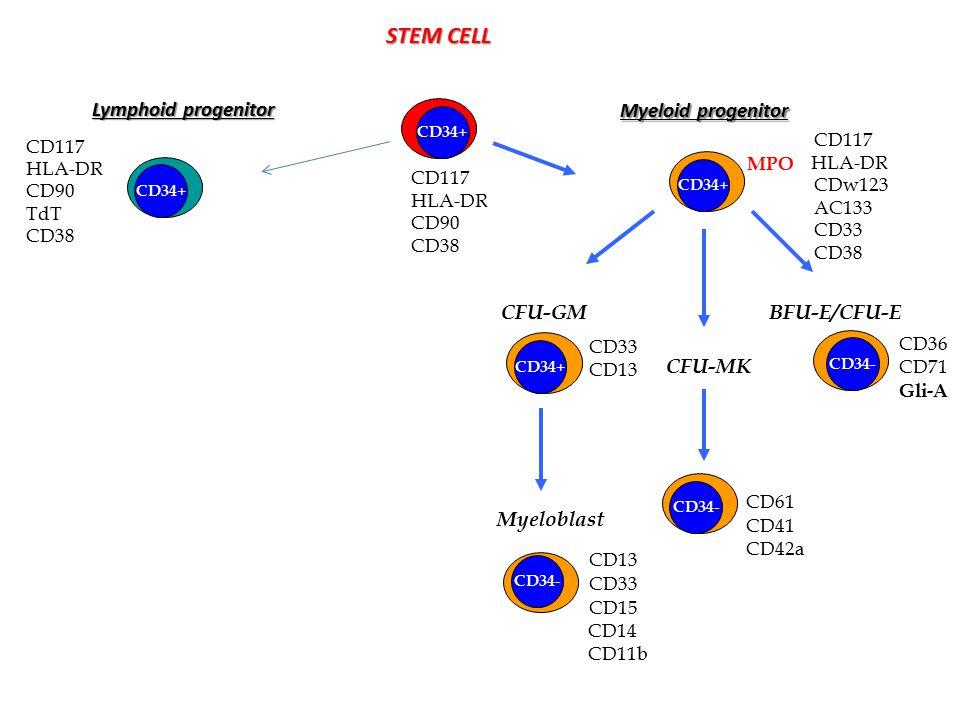 STEM CELL Lymphoid progenitor Myeloid progenitor CFU-GM Myeloblast