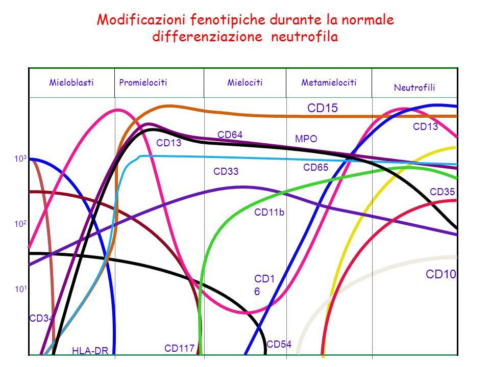 Modificazioni fenotipiche durante la normale differenziazione neutrofila