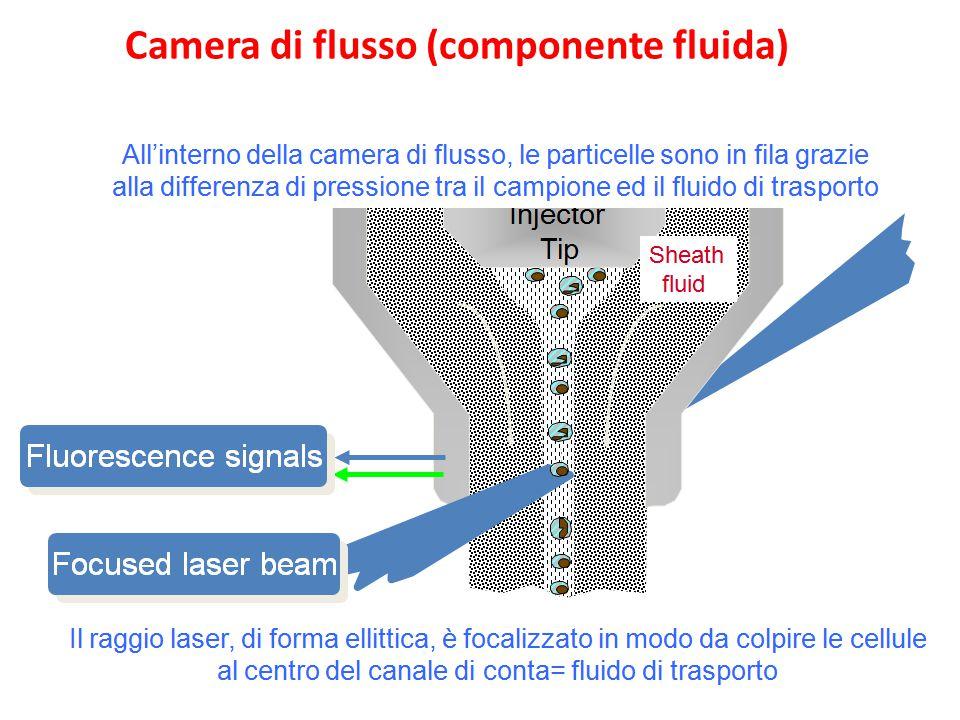 Camera di flusso (componente fluida)