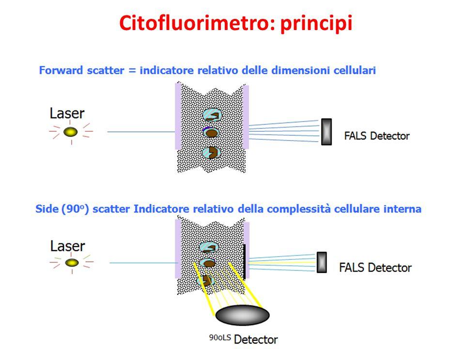 Citofluorimetro: principi
