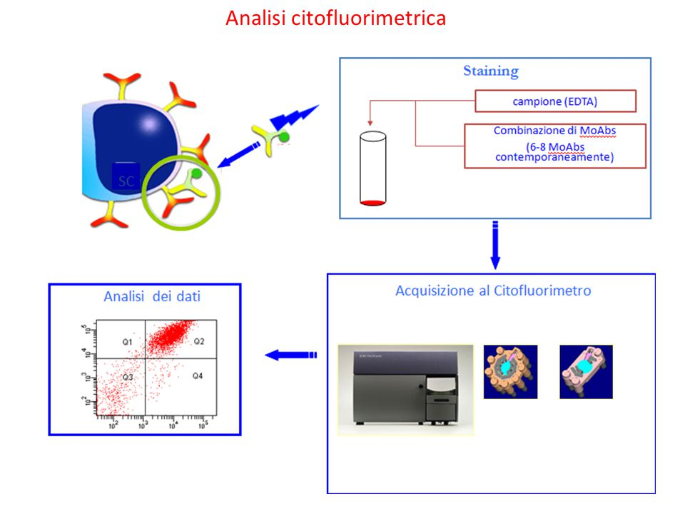 Analisi citofluorimetrica