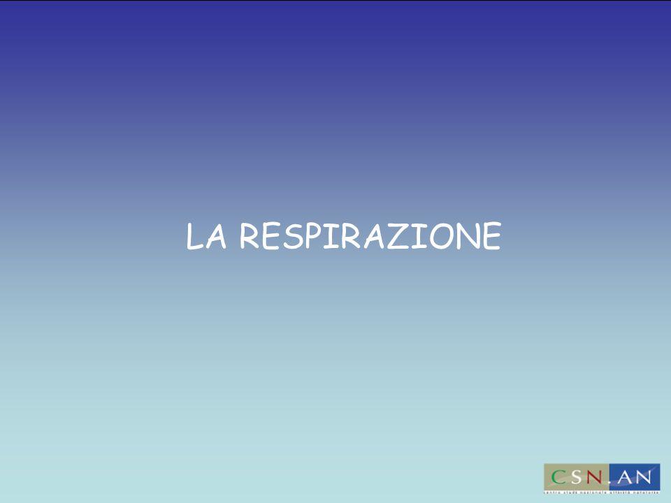 LA RESPIRAZIONE 23