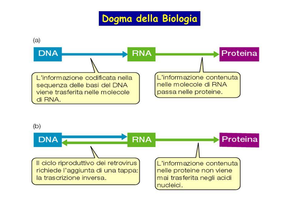 Dogma della Biologia