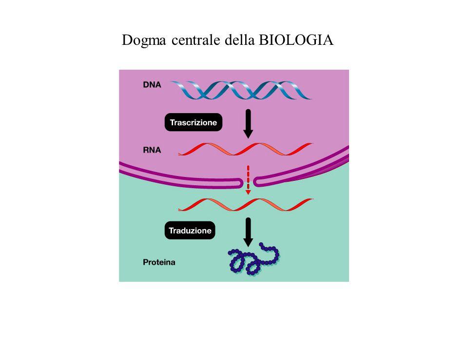 Dogma centrale della BIOLOGIA