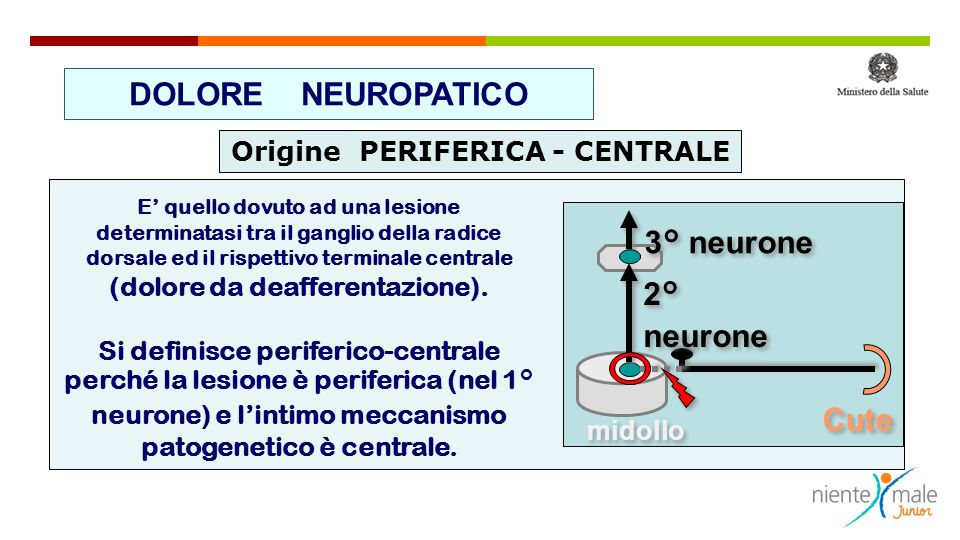 DOLORE NEUROPATICO 3° neurone 2° neurone Cute