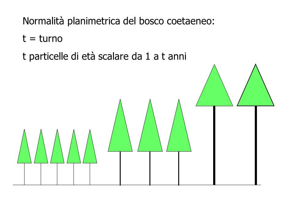 Normalità planimetrica del bosco coetaeneo: