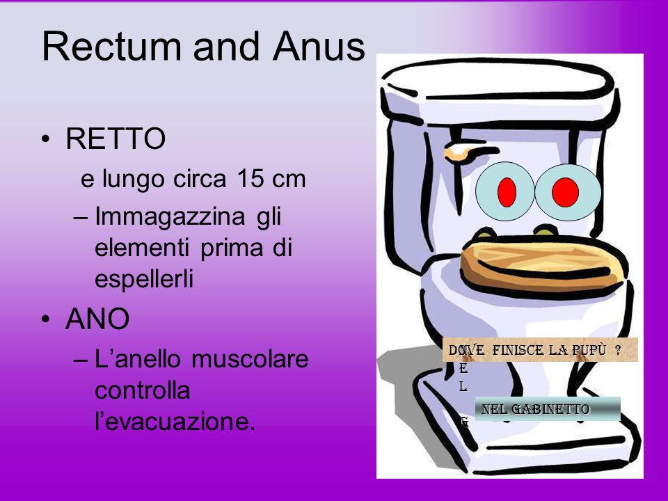Rectum and Anus RETTO ANO e lungo circa 15 cm