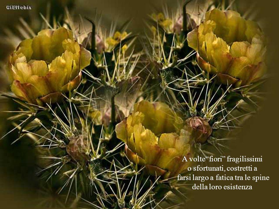 A volte fiori fragilissimi o sfortunati, costretti a