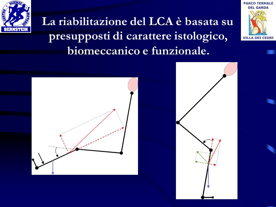 La riabilitazione del LCA è basata su presupposti di carattere istologico, biomeccanico e funzionale.