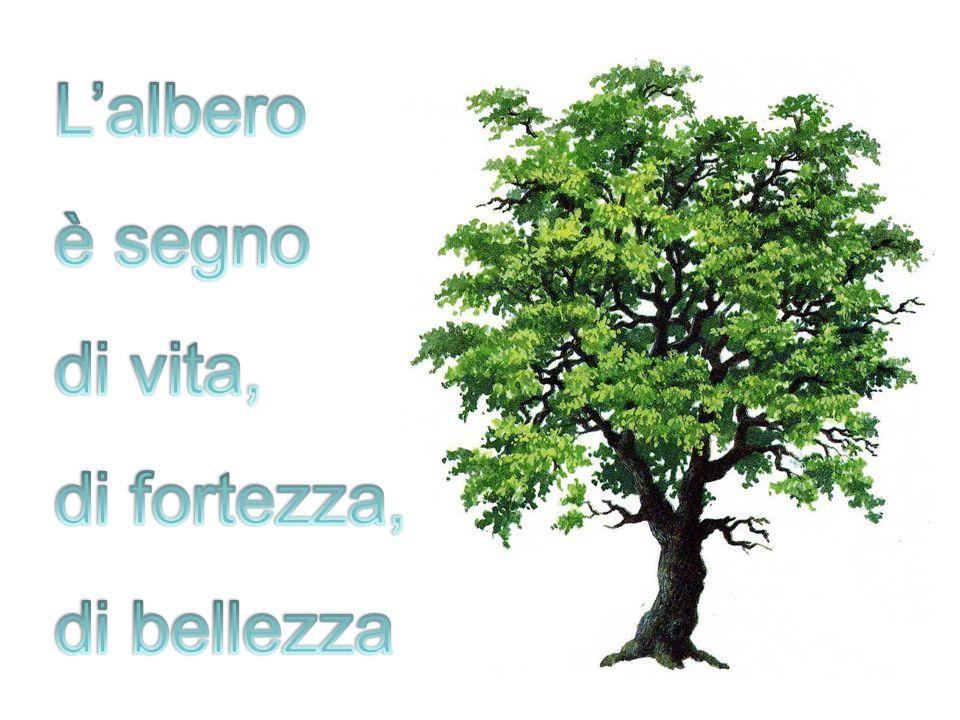 L'albero è segno di vita, di fortezza, di bellezza
