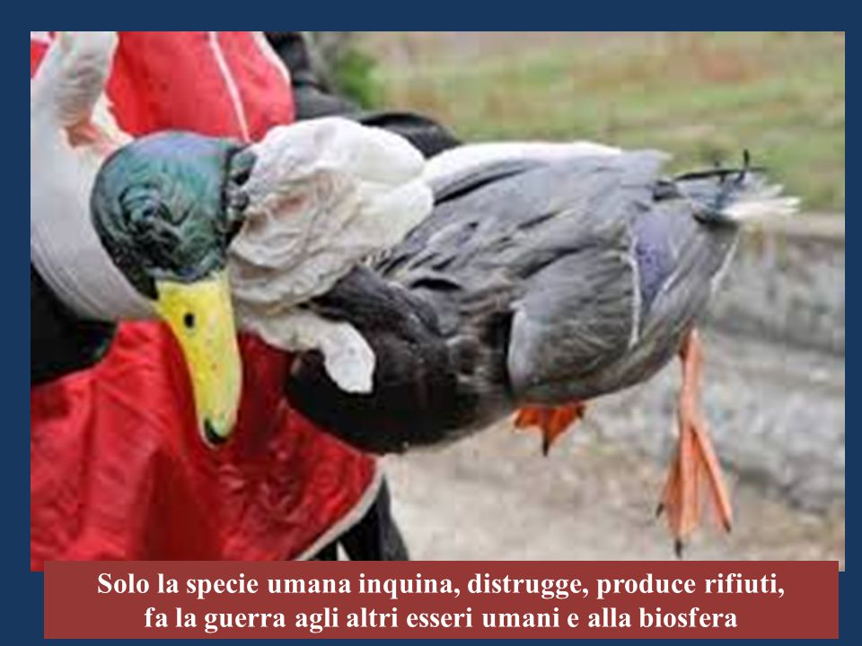 Solo la specie umana inquina, distrugge, produce rifiuti,