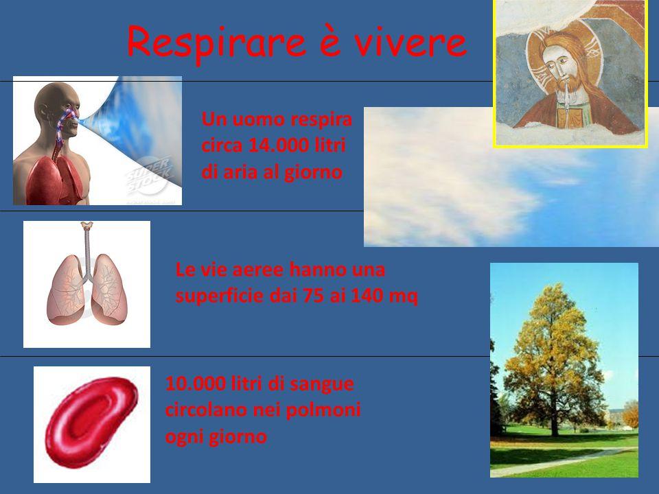 Respirare è vivere Un uomo respira circa 14.000 litri di aria al giorno. Le vie aeree hanno una superficie dai 75 ai 140 mq.